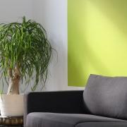 grön väggfärg inomhus bakom soffan